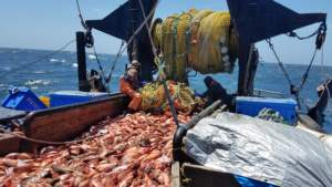 Why eat sustainably caught local fish?